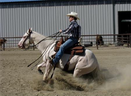 cremello quarter horse stallion