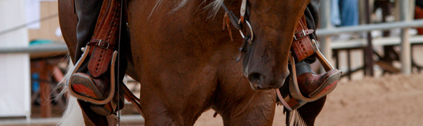 arabian reining horses for sale