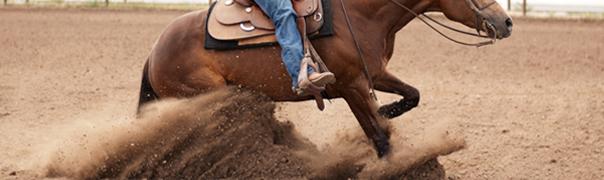 half arabian reining horse for sale