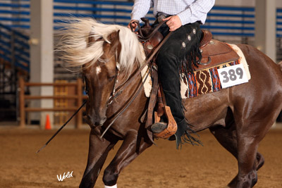 half arabian reining horse for sale