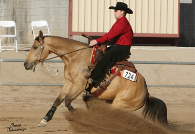Half arabian reining horse