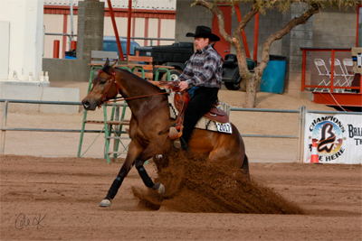 half arabian reining for sale