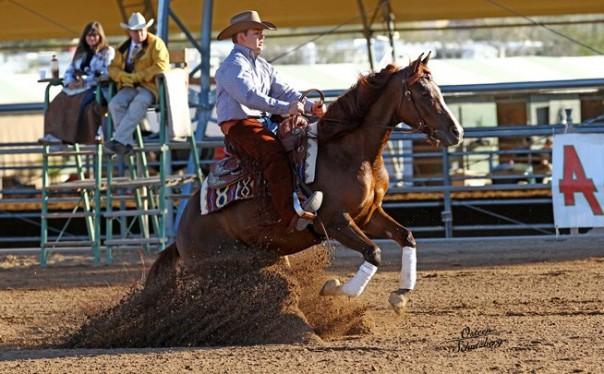 arabian reining horses for sale