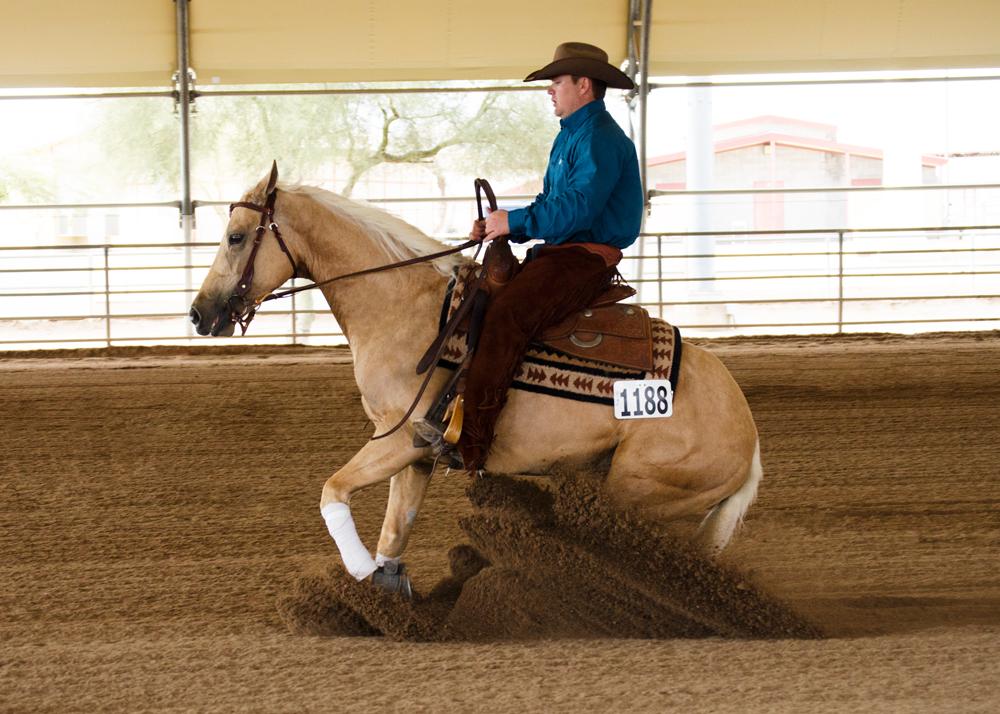 Half Arabian Reining Horses