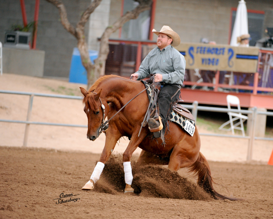 arabian reining horse